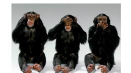 3-scimmie1a