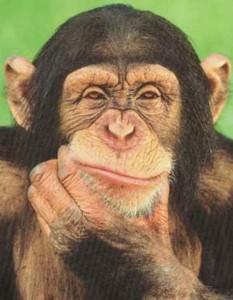 scimmia_pensa1