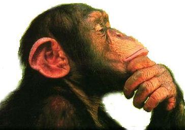 scimmia_pensa2C