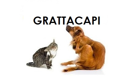 grattacapo2a