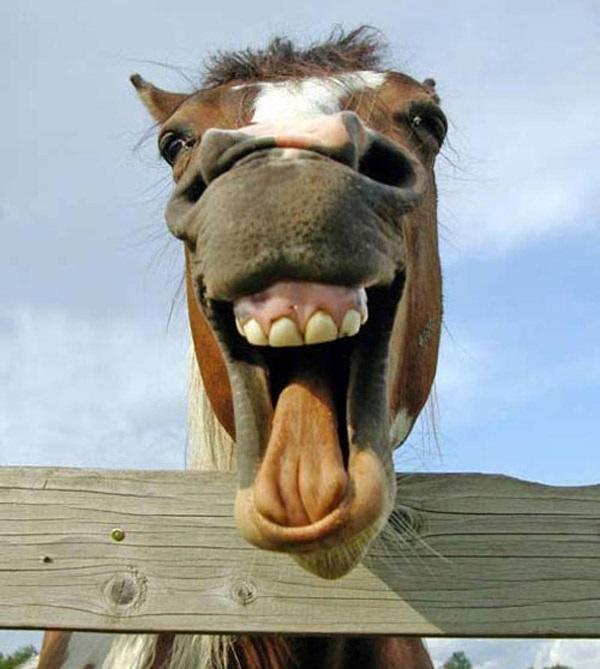 cavallo-che-ride