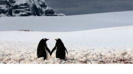 pinguini-innamorati1a