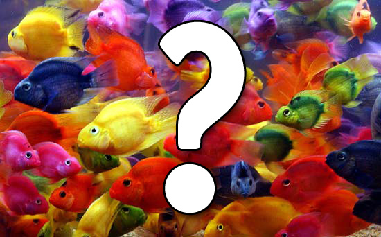 pesci-pigliare2