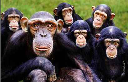 scimmie6
