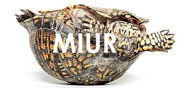 MIUR-tartaruga-capovolta1