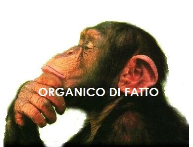 scimmia_organico02