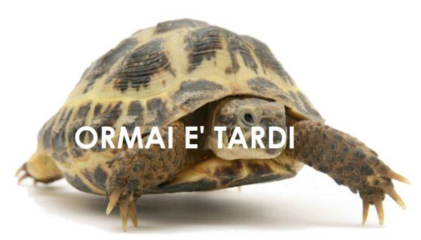 tartaruga-tardi12