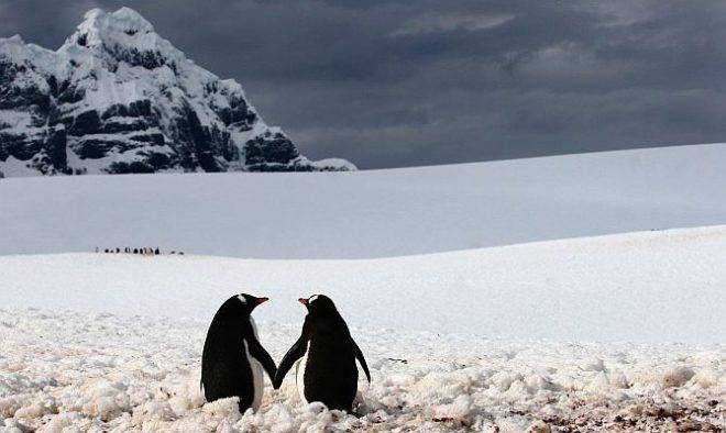pinguini-innamorati1